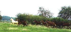 Hästar på flykt
