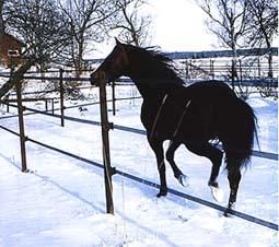 Bruna band och snö