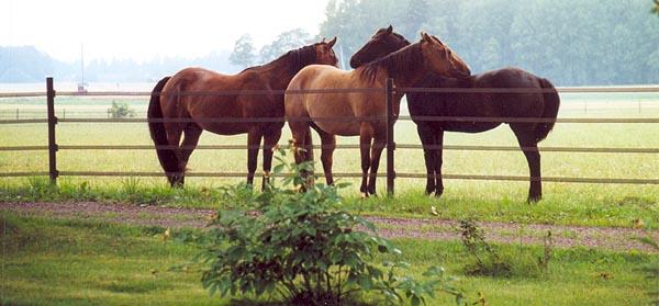Elband stängsel håller hästar inne