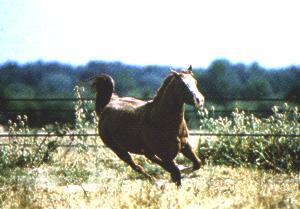 Hästen springer därifrån